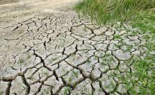 Positive and negative effects of climate change