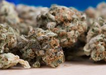 Positive and negative effects of legalizing weed