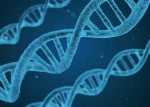 Positive and negative effects of cloning