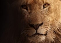 Positive and negative effects of keeping a wild animal